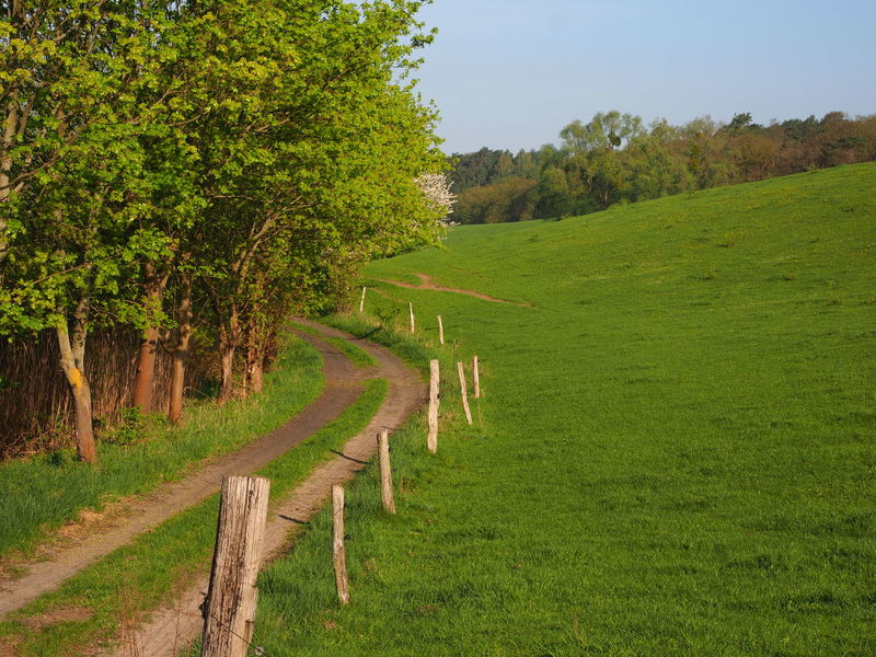 Barnim Barrier Beauty In Nature Boundary Day Environment Field Footpath Grass Green Color Growth Land Landscape Nature No People Outdoors Plant Scenics - Nature Sky Springtime Trail Tranquil Scene Tranquility Tree