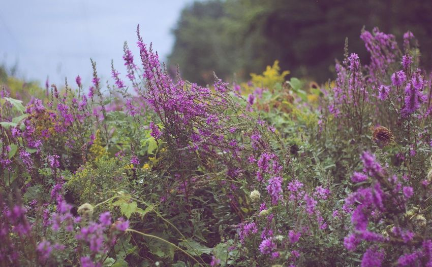 Popular Photos Photooftheday EyeEm Gallery Nature_collection EyeEm Best Shots EyeEm Check This Out Flowering Plant Flower Plant Beauty In Nature Growth Purple Vulnerability  Freshness Nature Fragility No People Pink Color Day Wildflower Outdoors