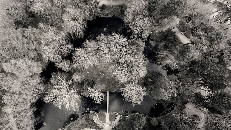 Vidago Drone  Dronephotography Plant Tree Outdoors Nature Bridge Black And White Photography BlackandwhiteMH Black & White Blackandwhitephotography Blackandwhite Photography Blancoynegro Portugaldenorteasul Portugal Tranquility Landscape Black And White Fromthetop
