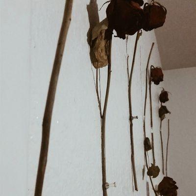 Dead Rosa installation in my room VSCO Vscogrid Vscocamedit Vscogood mornin