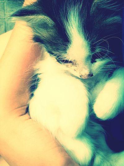 Baby Cat♡ My Cat ❤ Cut Pets Cat♡