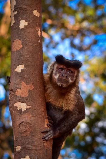 Monkey see,