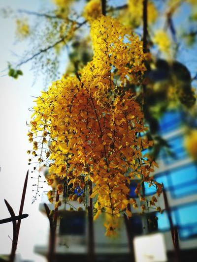 EyeEm Selects Tree Close-up Sky Architecture Blooming Flower Head In Bloom Plant Life