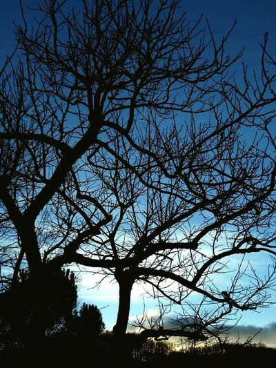 Contrast Blue Sky Black First Eyeem Photo Hi! Taking Photos My Best Photo 2015 Tree Branches And Sky Branches And Shadow Tree Branches Branches ❤ Branches Like Veins