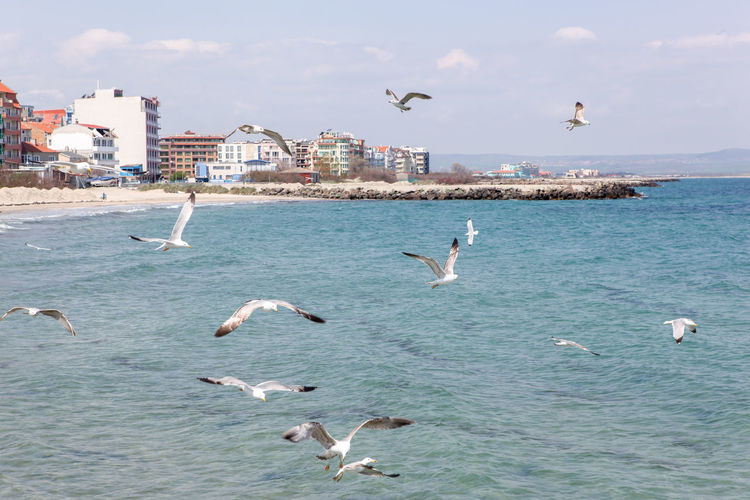 Seagulls Flying Over Sea On Sunny Day Group Of Animals Animals In The Wild Animal Themes Animal Wildlife Vertebrate Bird Animal Water Flying Building Exterior Sea Architecture Built Structure Large Group Of Animals Sky Seagull Spread Wings Mid-air Nature No People Flock Of Birds Marine