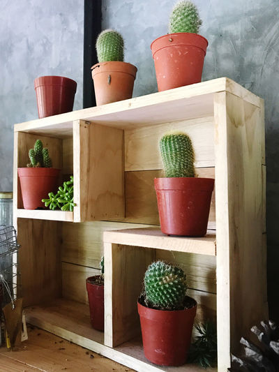Potted plants on shelf