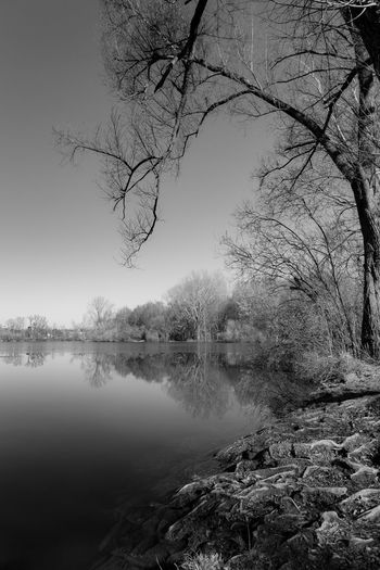 Tree Water Tranquility Plant Lake Tranquil Scene Scenics - Nature Beauty In Nature Reflection Nature No People Bare Tree Day Sky Branch Non-urban Scene Outdoors Black And White Nature_collection Lake View Idyllic