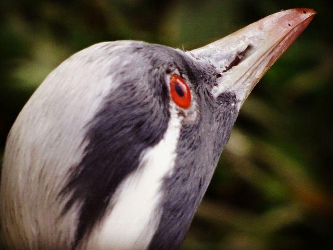iguaçu Uccelli Iguazu 🌈🔆