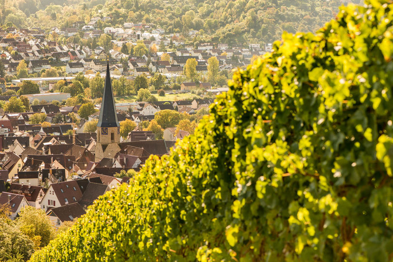 Vineyard with village of Geradstetten in Germany Church Geradstetten Green Remstal Vines Agriculture Architecture Building Exterior Built Structure City Day Green Color Growth History Nature No People Outdoors Rural Scene Travel Destinations Tree Village Vineyard Yellow