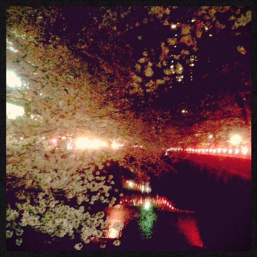Relaxing Cherry Blossoms at 目黒川 ✰