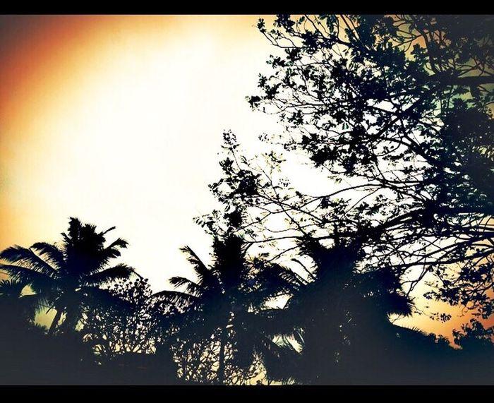 Palmtrees Things I Like
