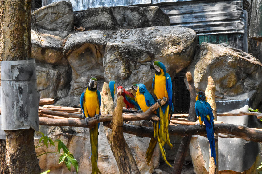 Just saw these guys chatting around! Bird Group Of Animals Parrot Animal Animal Wildlife Animals In Captivity Animals In The Wild Outdoors Zoo Nature Macaw No People Parot Capture Tomorrow