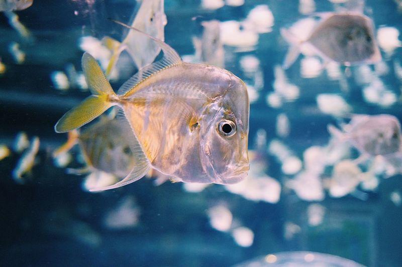 Fish Swimming Water Aquarium Underwater Animal Themes Sea Life Close-up No People Indoors  Goldfish Day