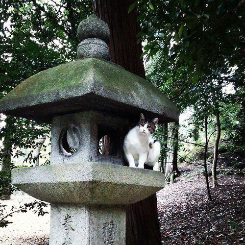 伏見稲荷 猫 灯籠 Cat StoneLantern Fushimi Inari Shrine Kyoto Traveling