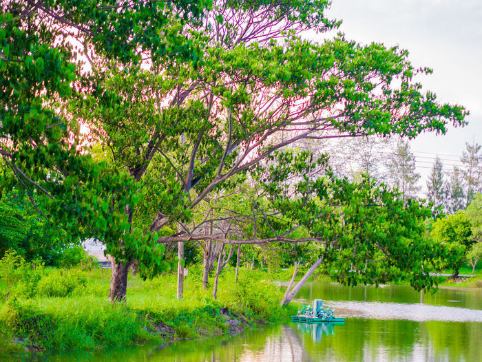 Thai view Water Plant Tree Lake Reflection Nature Tranquility Growth Beauty In Nature Tranquil Scene Day Scenics - Nature No People Outdoors Waterfront Flower Sky Park