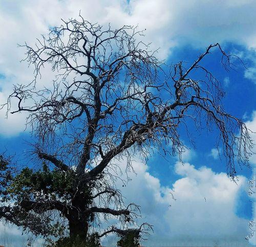Bird Tree Blue Silhouette Flock Of Birds Sky Animal Themes Cloud - Sky
