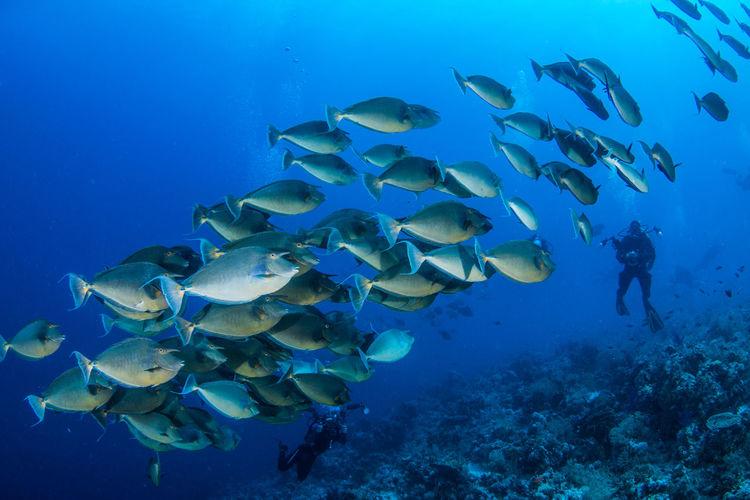 School Of Fish Swimming In Sea