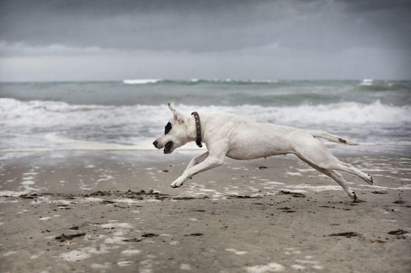 pet's Pets Water Sea Beach Dog Ear Wave Sand Young Animal Sky Canine Pet Collar