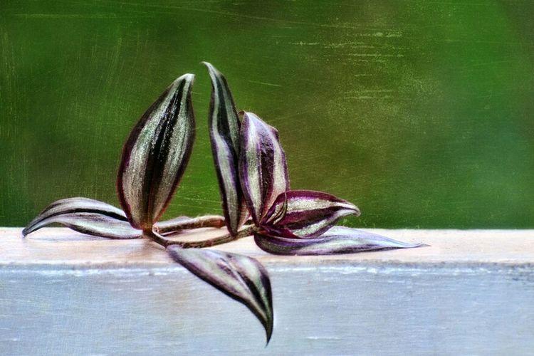 Fine art retro vintage wondering dew plant clipping