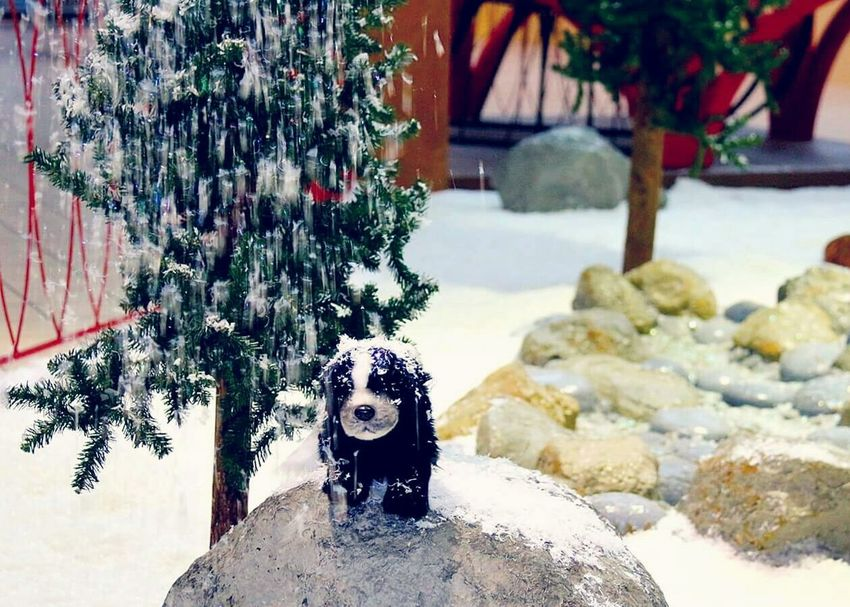 Snow Falling on Skunk Display at Santa's Wonderland😊( Weather changes coming courtesy of my family) Christmas Around The World