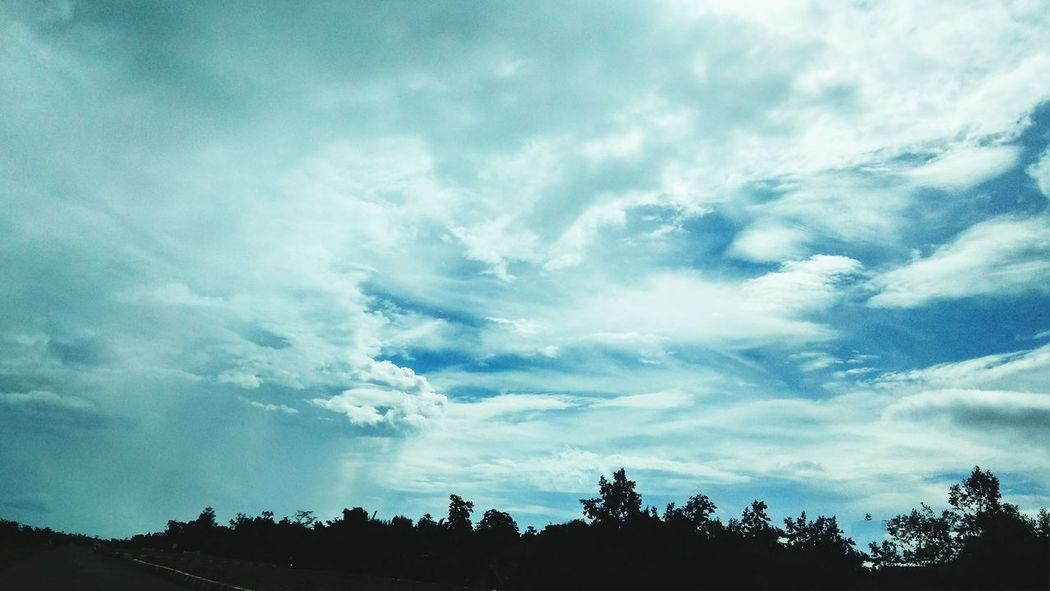 The daytime horizon with thick clouds Tree Forest Blue Silhouette Pinaceae Power In Nature Pine Tree Dramatic Sky Sky Cloud - Sky