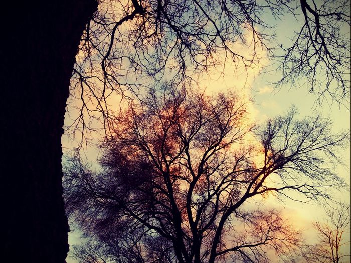 Low Angle View Tree Sky Nature Growth Silhouette Sunset No People Branch Outdoors Beauty In Nature Day Close-up Pretty♡ Check This Out Picturejunkie Perspectives On Nature Workplace
