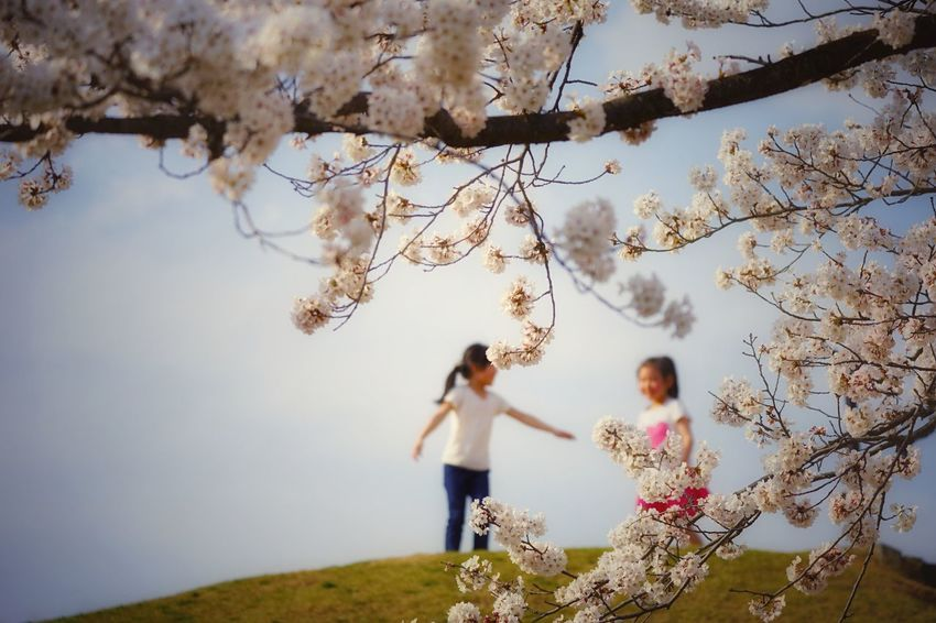 Capture The Moment Uzukiの桜 Depth Of Field Kids Two People Focus On Foreground Sakura Beauty In Nature Springtime Fantasy Fine Art Snapshots Of Life Uzuki Of The Flower Landscapes Uzu St. Cherry Blossom The Secret Spaces Still Life Nature Happiness Togetherness Full Frame Detail Sigma EyeEm Best Shots 17_04 EyeEmNewHere The Street Photographer - 2017 EyeEm Awards