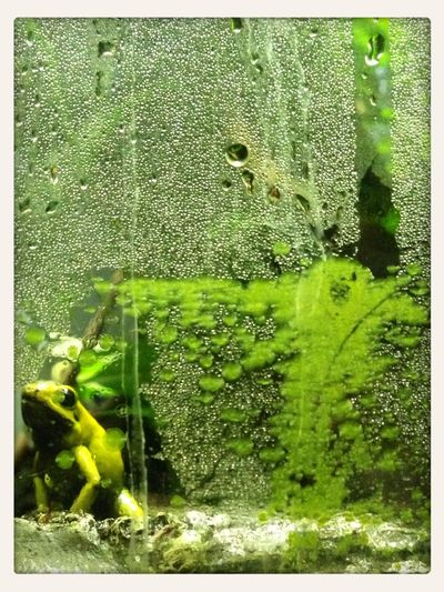 Abstract Frog Nature Glass