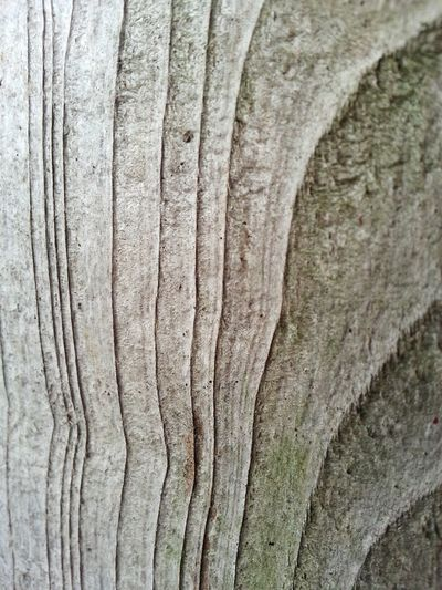 Backgrounds Close-up No People Full Frame Textured  Knotted Wood Outdoors Day Buying And Selling Stock Photo EyeEm Gallery Check This Out Backyard Wood Vector Pattern Wood Texture Lines Fence Plank Stiff Hard Solid Natural Pattern Movement houston, texas