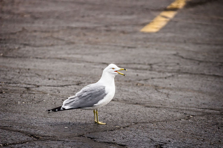 Close-up side view of a seagull