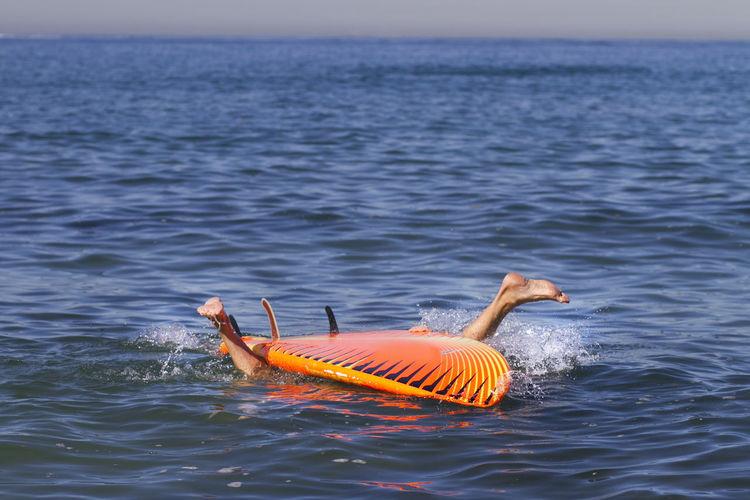 Surfboarding In Calm Blue Ocean