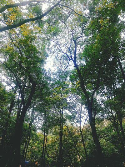 ที่นี่ มหาวิทยาลัยรัตนบัณฑิต มิใช่ป่าไม้ First Eyeem Photo