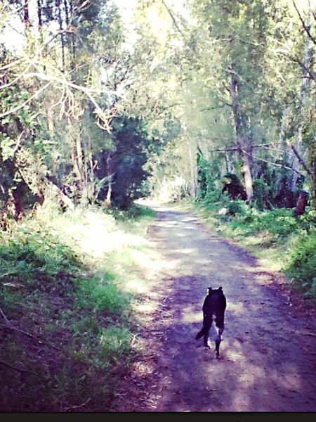 A strong memory Tranquil Slow Pace No People Walking Nature Path Dogs