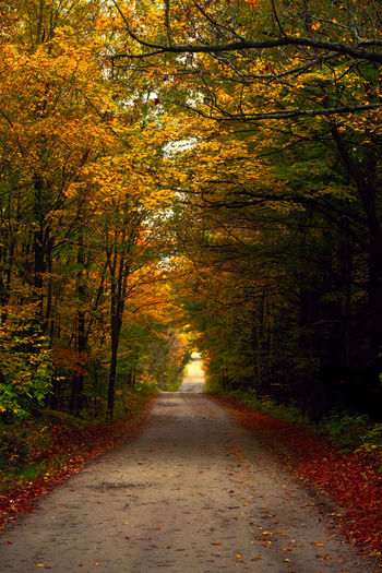 Walking down a counrty road Walking Down A Country R Autumn Beauty In Nature Change Day Forest Landscape Leaf Nature No People Outdoors Road Road Home Scenics The Way Forward Tranquil Scene Tranquility Tree