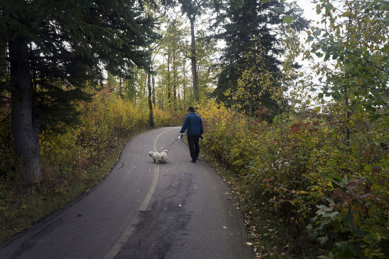 Rear view of man walking with dog on road in forest