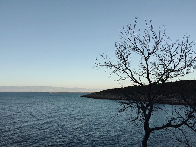 Slowly setting sun at Veli Losinj lungomare, Croatia, 2017. Veli Lošinj Losinj Croatia Lungomare Sunset Nature Bare Tree Beauty In Nature Tranquil Scene Scenics Tranquility Water Outdoors Adriatic Mediterranean