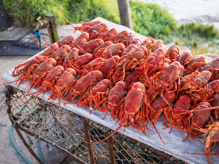 Close-up of lobster on table outdoors