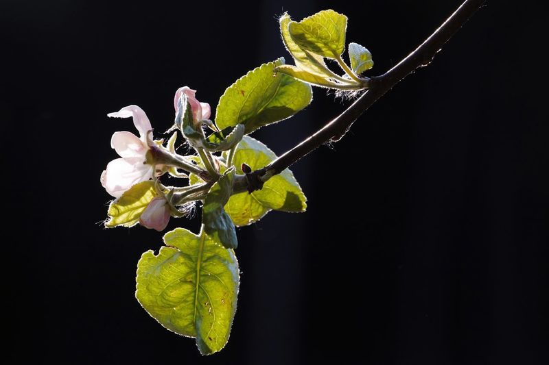 Close-up of flowering plant against black background