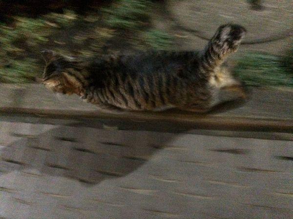 Stray Cat 夜ねこ 野良猫 走り猫