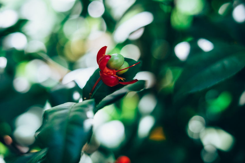 Beauty In Nature Bokeh Close-up Copy Space Flower Flower Head Fortune Freshness Fruit Gardening Green Color Growth Leaf Money Tree Nature New Life Plant Pollen Pollination Seed Side View