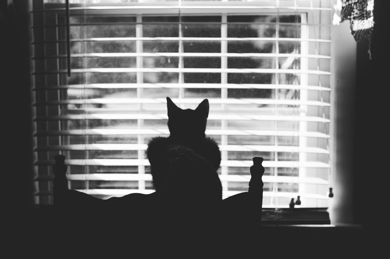 Cat looking through window at home