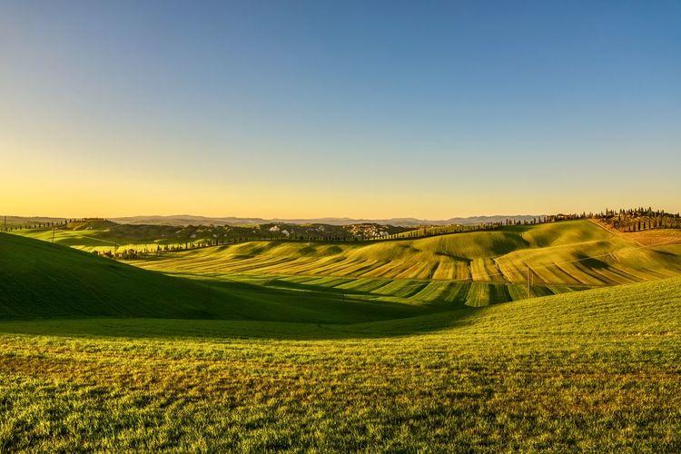 Crete Senesi Tuscany Agriculture Beauty In Nature Clear Sky Day Farm Field Growth Landscape Nature No People Outdoors Rural Scene Scenics Siena Sky Tranquil Scene Tranquility