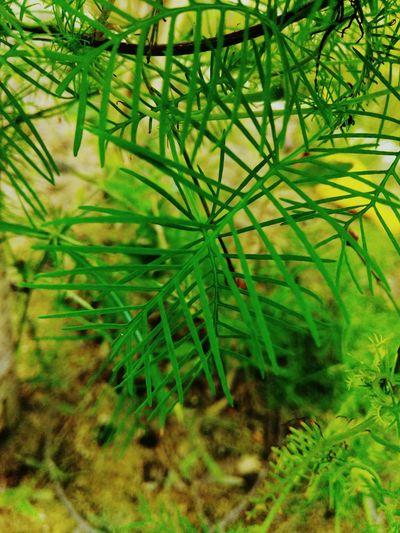 leaf Leaf Palm