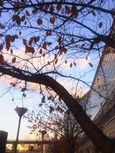 Relaxing Colored Leaves Sky And City Sunset
