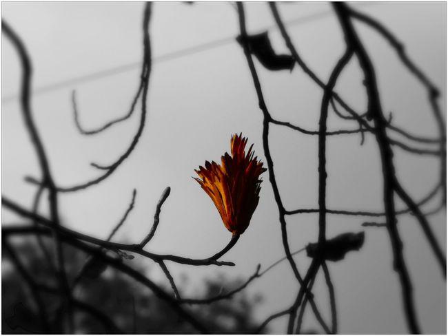 Onlyone Onlyflowers Flowers los in time