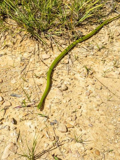 High angle view of lizard on land