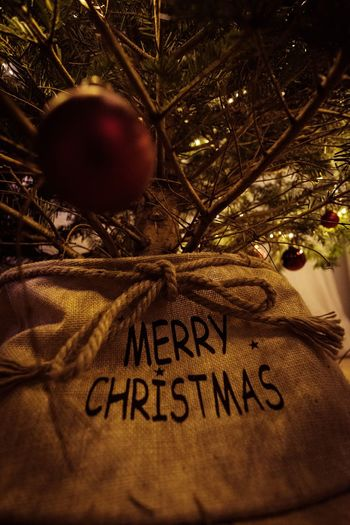 under the christmas tree... Fujifilm X-t20 Walimex 12mm Fujifilm Christmastime Christmas Lights Mary Christmas Text Christmas Celebration Communication Indoors  Tree Christmas Ornament Close-up Christmas Decoration Holiday - Event Christmas Tree