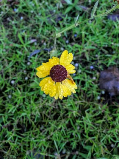 Morning Dew Yellow Yellow Flower Flower Flower Collection Flowers,Plants & Garden Wild Flowers