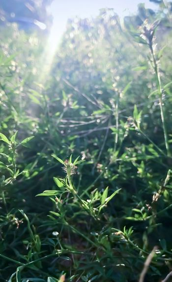 Close-up of fresh green plants in sunlight
