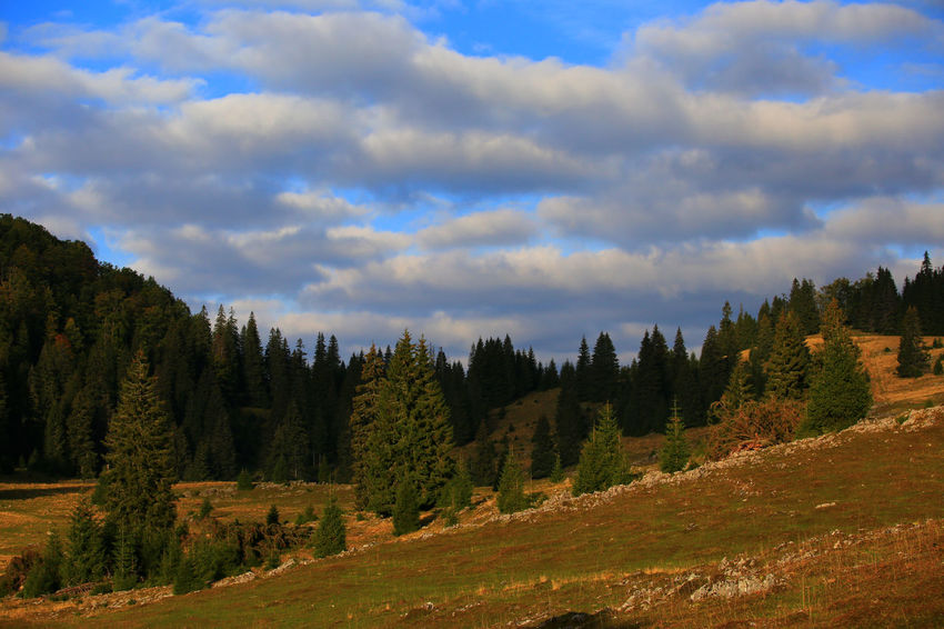 Grass Perspectives On Nature Pine Forest Day Nature No People Outdoors Pine Trees Sky Sky-clouds Transylvania💕 Tree